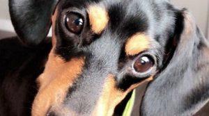 Il veterinario confonde i numeri di telefono dei padroni e sopprime il cane sbagliato